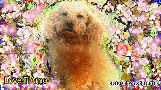 TiAmo picture