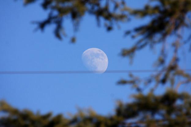 昼下がりの月