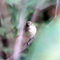 Photos: 藪の中から覗いてるのは誰だ?