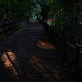 写真: 玉川上水_木漏れ日-1158