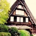 やっぱりこの合掌造りの民家。。白川郷。。川崎市日本民家園6月28日