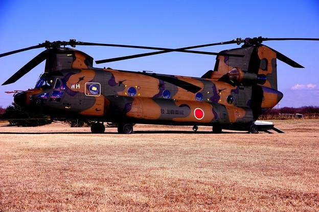 習志野駐屯地 展示 CH-47チヌーク・・20150111