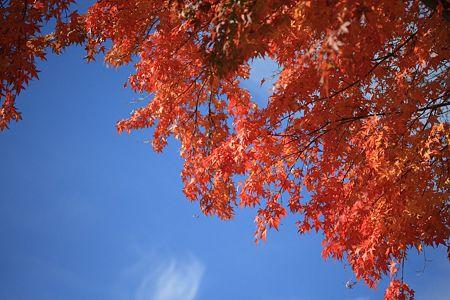 20111109-095525 中禅寺湖半にて