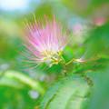Photos: きっと栗の花です!