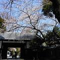 Photos: 2012・八芳園の桜1