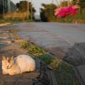 写真: 夕日が目に染みる(池島)