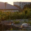 写真: かがやく猫(池島)