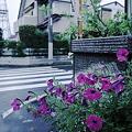 写真: RIMG21590_110729