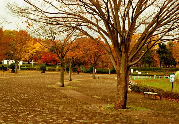 葉も落ちて・・・