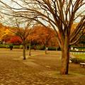 Photos: 葉も落ちて・・・
