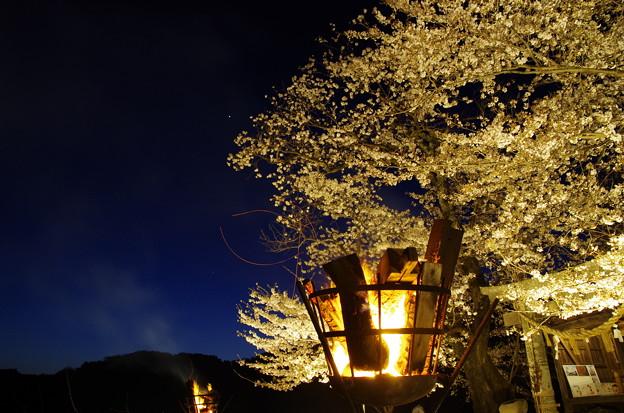 夕月桜(^0^)?