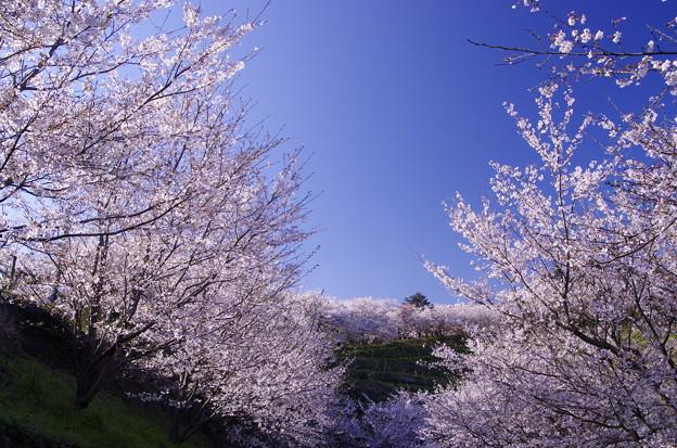 春景色・・・♪