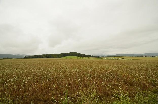 白銀の丘 蕎麦畑