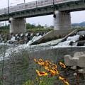 写真: 川辺のお花