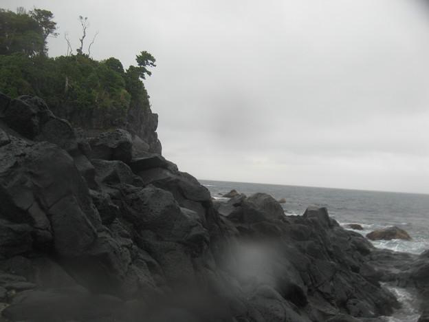 写真: 雨の伊豆海洋公園