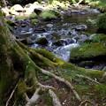 苔むした木と滑沢川