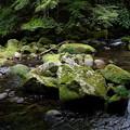 滑沢川と苔むした石