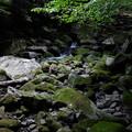 滑沢渓谷の苔むした石
