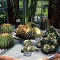 Photos: 牧野植物園のサボテン