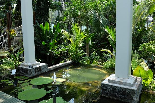 牧野植物園の温室の池