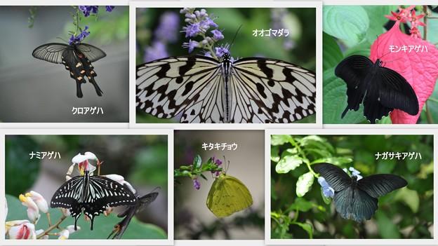 蝶さん(2)