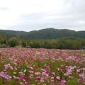 写真: 滝野すずらん丘陵公園