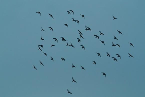 Photos: ハトの群舞