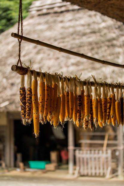 収穫  ~The taste of the autumn~