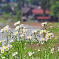畦道に咲く花